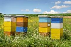 Beekeeping Royalty Free Stock Image