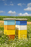 Beekeeping. Beehives in a wildflower field, eastern Europe stock photography