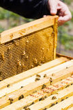 Beekeeping Stock Images