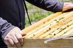 Beekeeping Stock Images