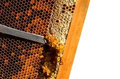 Beekeeping. Beekeeper at work crafting honey Royalty Free Stock Images