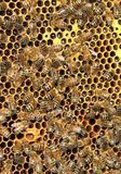 Beekeeping. Bees and honeycombs, close up image Royalty Free Stock Images