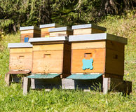 Beekeeping. Bees flying to a wooden beeyard Royalty Free Stock Images