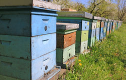 Beekeeping, bees and hives. In the orchard royalty free stock photos