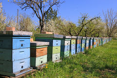 Beekeeping, bees and hives Royalty Free Stock Photo