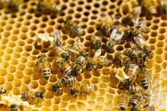 Beekeeping Royalty Free Stock Photos