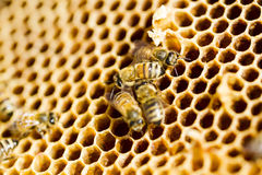 Beekeeping Stock Photos