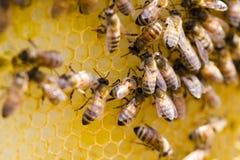 Beekeeping Royalty Free Stock Photo