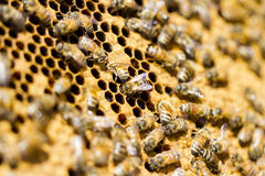 Beekeeping Royalty Free Stock Photo