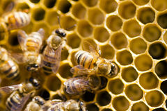 Beekeeping Royalty Free Stock Photos