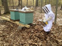Beekeeping child. Beekeeping with children Royalty Free Stock Photos
