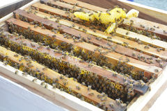 Beekeeping. Close up view of the working bees on the honeycomb Royalty Free Stock Photos