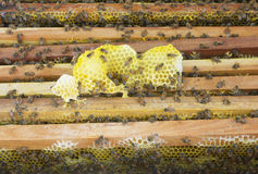 Beekeeping. Close up view of the working bees on the honeycomb Royalty Free Stock Images