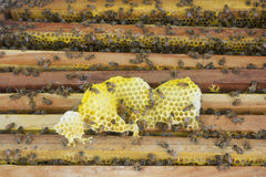 Beekeeping. Close up view of the working bees on the honeycomb Royalty Free Stock Image