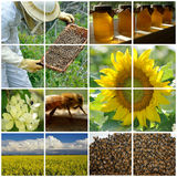 Beekeeping collage. Details of the work involved in beekeeping Royalty Free Stock Images