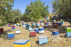 Beekeeping on Crete Royalty Free Stock Images