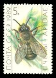 Beekeeping, Drone, Apis mellifica. USSR - stamp printed 1989, Memorable multicolor edition offset printing, Topic Fauna - Insects and Bees, Series Beekeeping royalty free stock photo