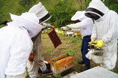Beekeeping in Ecuador. A group of beekeepers in Ecuador showing a frame of bees with hives in the background royalty free stock photos