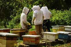 Beekeeping in Ecuador. A group of beekeepers in Ecuador showing a frame of bees with hives in the background royalty free stock images