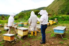 Beekeeping in Ecuador. A small group of people doing some routine check on the beehives, with a backdrop of mountains stock photo