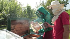 Two beekeepers in green and red special attire, collecting honey. Beekeeping, frames beehive, two beekeepers in green and red special attire, collecting honey stock video
