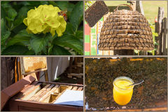 Beekeeping and honey production workflow. From the harvesting to the finished honey stock image