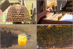 Beekeeping and honey production workflow. From the harvesting to the finished honey royalty free stock images