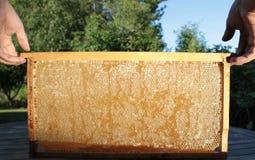 Beekeeping and honeycomb. Beekeeping and natural honeycomb stock photo