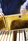 Beekeeping. Installation of bee hives at new location Stock Images