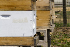 Beekeeping. Installation of bee hives at new location Stock Photo