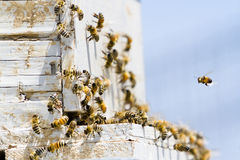 Beekeeping. Installation of bee hives at new location Royalty Free Stock Photos