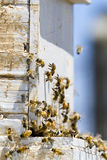 Beekeeping Stock Photography