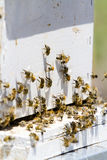 Beekeeping. Installation of bee hives at new location Royalty Free Stock Image