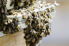 Beekeeping. Installation of bee hives at new location Royalty Free Stock Images