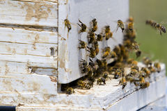 Beekeeping. Installation of bee hives at new location Royalty Free Stock Photography