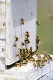 Beekeeping Stock Photography