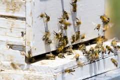 Beekeeping. Installation of bee hives at new location Royalty Free Stock Photo