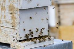 Beekeeping Royalty Free Stock Photography