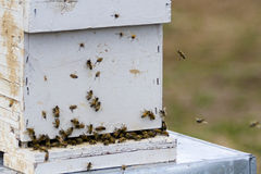 Beekeeping. Installation of bee hives at new location Stock Photography