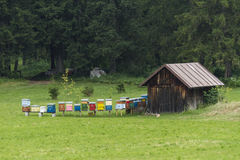 Beekeeping in the mountains Stock Photo