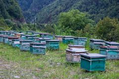 Beekeeping in the mountains. Breeding bees in wooden hives in the mountains, Georgia, Svaneti stock photos