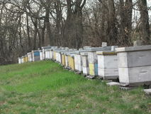 Beekeeping. Order hives in the meadow stock photo