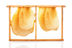 Beekeeping. Organic honey in honeycomb over white background. Honey making and Beekeeping stock photos