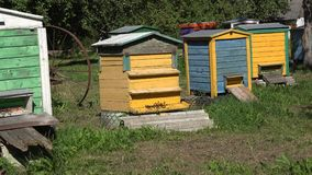 Beekeeping pasieka Kolorowi pszczoła roje w wioska ogródzie Zoom out 4K zbiory