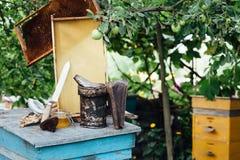 beekeeping Pasika miodu honeycomb zdjęcie royalty free