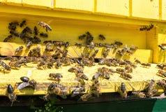 beekeeping pszczół colldet10711 colldet10734 colldet11059 com dreamstime pusty karmowy miodowy honeycells honeycomb href http odi zdjęcia royalty free