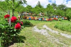 Beekeeping in rural yard during spring stock image