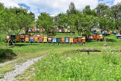 Beekeeping in rural yard during spring. Colorful beehives in a countryside yard in eastern Europe during springtime royalty free stock images