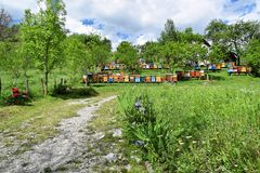 Beekeeping in rural yard during spring. Colorful beehives in a countryside yard in eastern Europe during springtime royalty free stock photo