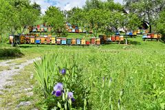 Beekeeping in rural yard during spring. Colorful beehives in a countryside yard in eastern Europe during springtime stock photography